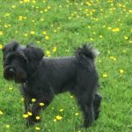 Owners dog at The Annex dog friendly Self Catering Accommodation Malvern