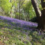 The Malvern Hills Habitat Woodlands