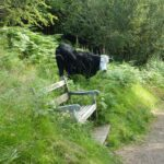 The Malvern Hills Habitat Cattle