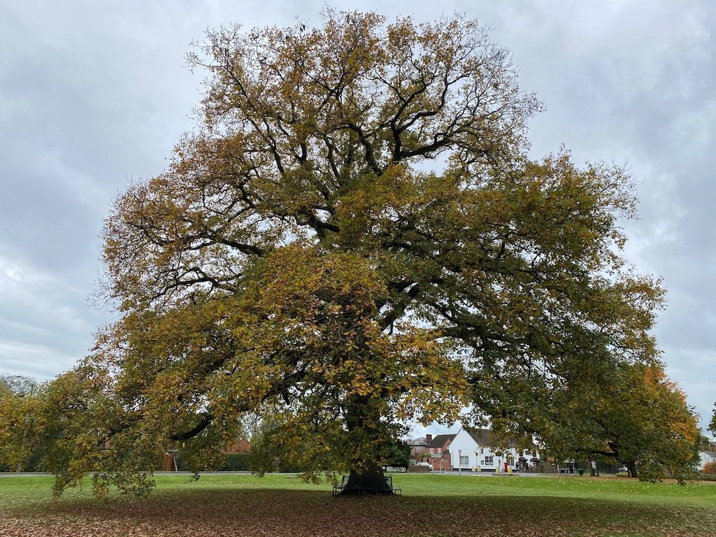 Hanley-swan-oak-tree